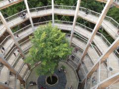 Höher, schöner, grüner – die Natur von oben entdecken. Baumwipfelpfad Steigerwald, Ebrach